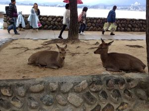 There are small docile deer on Miyajima island that prey on tourists for food. Similar to the deer, only with a little more sheen to their coat, the deer are considered a sacred animal.