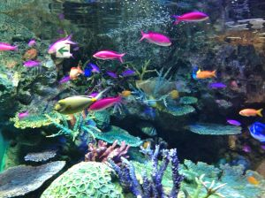 I ran out of snow pictures so here is a picture of fishes at the aquarium.