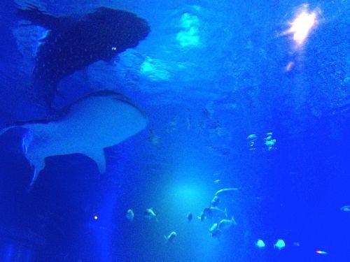 Yu-chan. She's a goddamn whale shark!