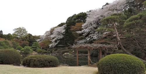 This is a picture of the traditional Japanese garden.