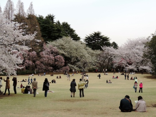 Whatever it is you do, hanami is an outstanding way to reconnect with loved ones.