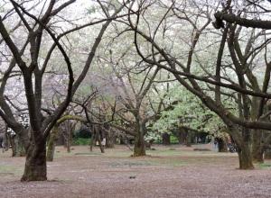 A grove in Shinjuku Gyoen.