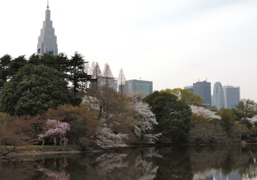 The park is in the heart of Shinjuku, which is the western hub of Tokyo, thus one of the busiest areas of the city.