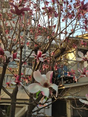 Not cherry blossoms, but still pretty.