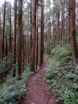 The trail from Mount Hinode to Hinawada Station.